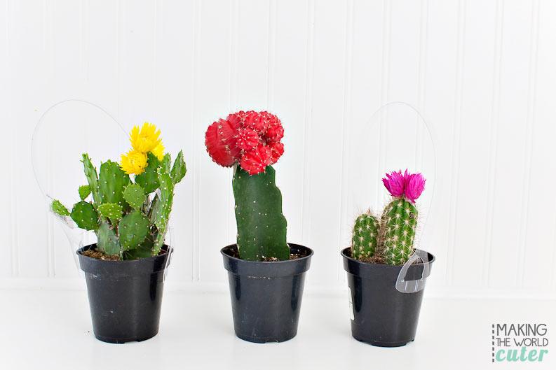 DIY Cactus garden! I Love this so so much!