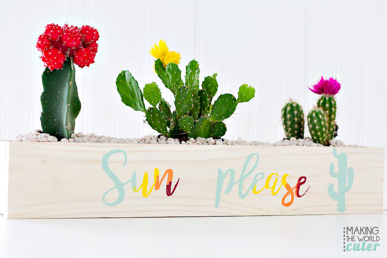 DIY Cactus garden! I Love this so so much!